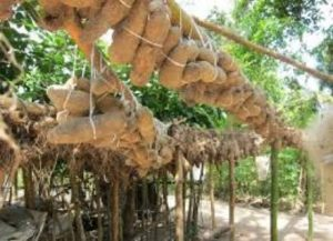 How To Start Yam Farming Business In Nigeria
