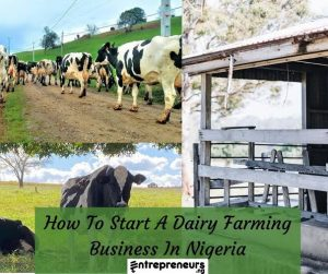 How To Start Dairy Farming Business In Nigeria